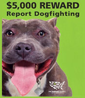 DogFightingreward